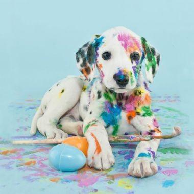 Limpieza e Higiene para Perros